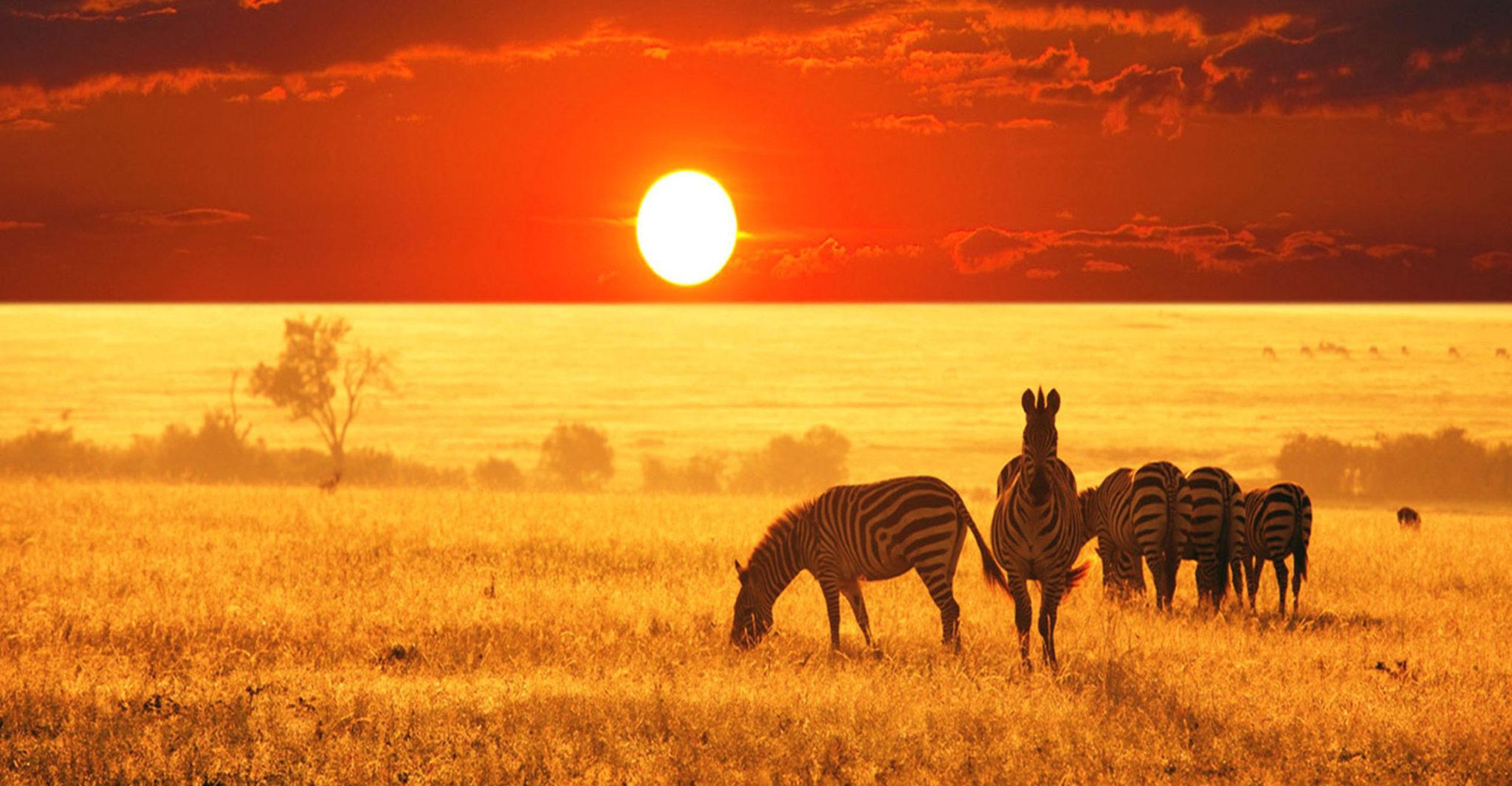 safari-42-e1440574548663